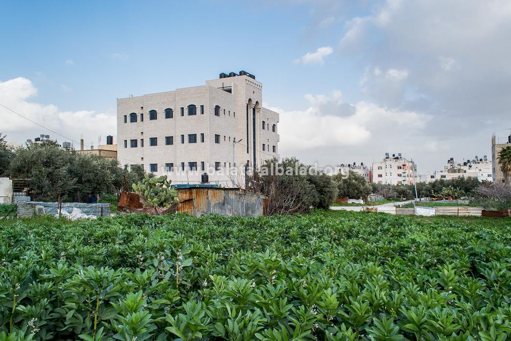 مزرعة أبو علاء