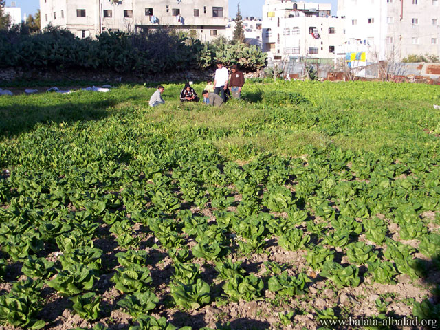 مزرعة أبو راني